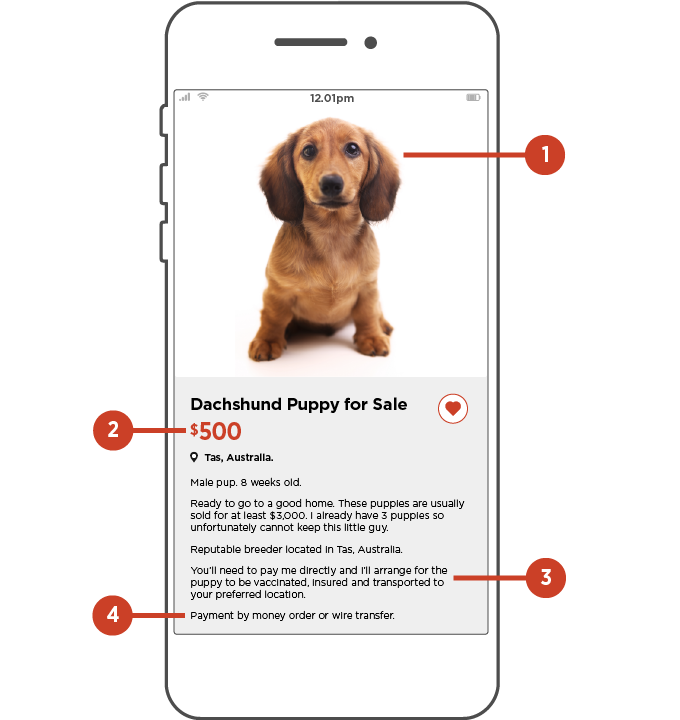 Image of phone with classified ad selling puppy indicating scam signs