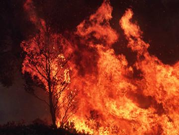 Bushfires and scams